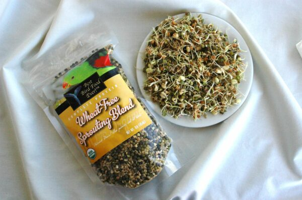 Wheat-Free Sprouting BLend