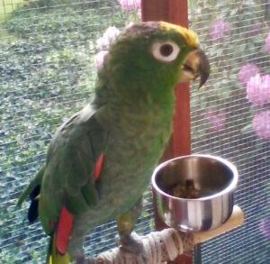 Oscar, Mealy Amazon LOVES BBFE!